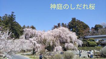 19-04-04-17-04-09-213_deco_640.jpg